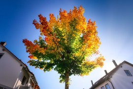6 Jobs to Add to Your Autumn Maintenance Schedule